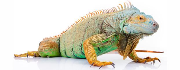 Reptiles Pets uk Reptiles Exotic Pet