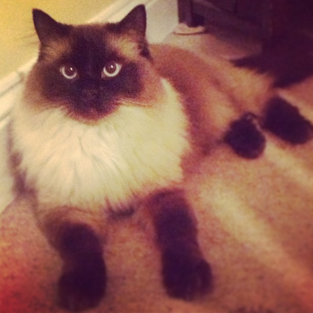 Our winner of May's Purrfect Pet is Ralph