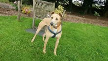 Astra at Dumfries and Galloway Canine Rescue
