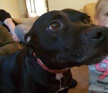 Bronson at Animal Concern West