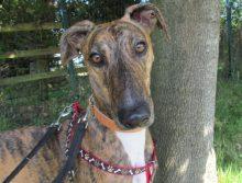 Bella at Oak Tree Animals' Charity