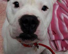 Dougie at Oak Tree Animals' Charity