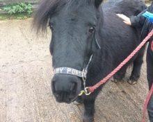 Missie at Oak Tree Animals' Charity