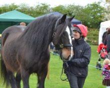 Mac at Oak Tree Animals' Charity