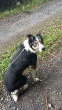 Marley at Animal Concern North