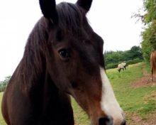 Rocky at Oak Tree Animals' Charity