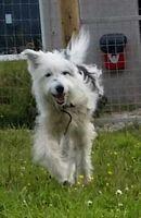 Rosie at Animal Concern West Cumbria