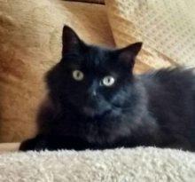 Alfie at Animal Concern West